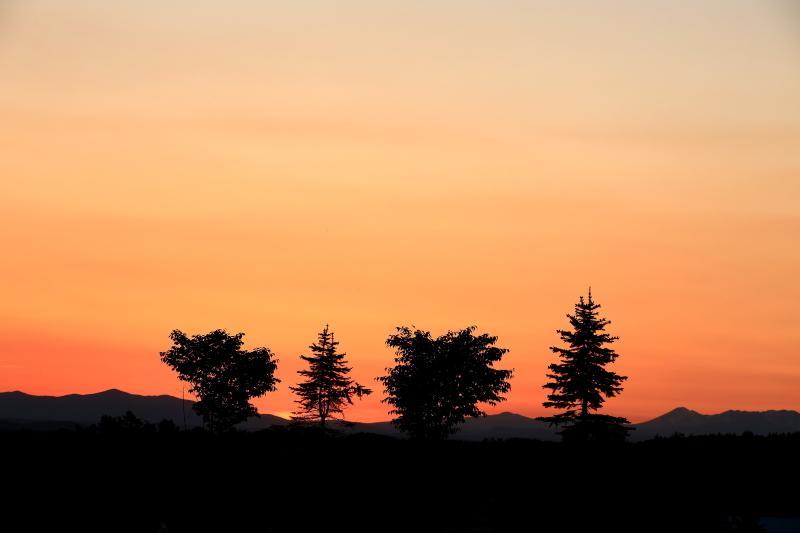 204 ひまわり畑の夕景0001