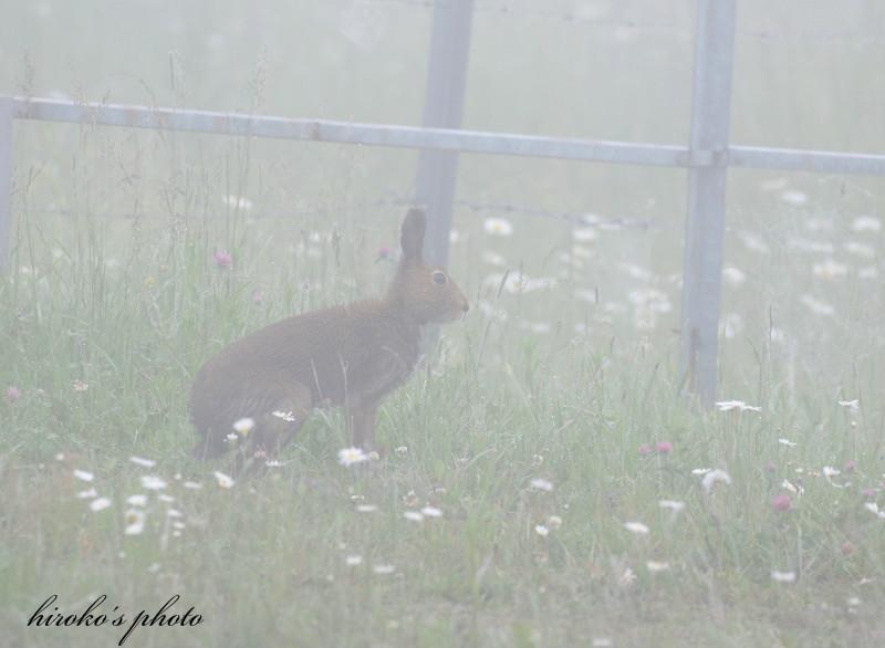066 ウサギ0001署名入りedited