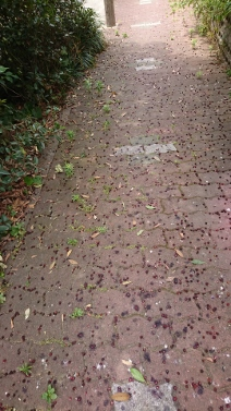 散歩① (212x377)