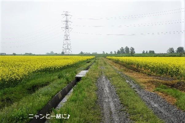 nanohana2 (2)