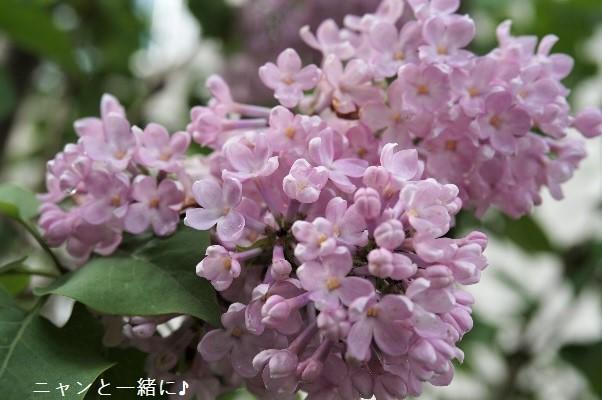 rira602a (2)