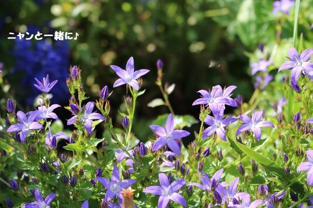 aoihosi77.jpg