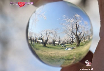 cyakomo366250.jpg