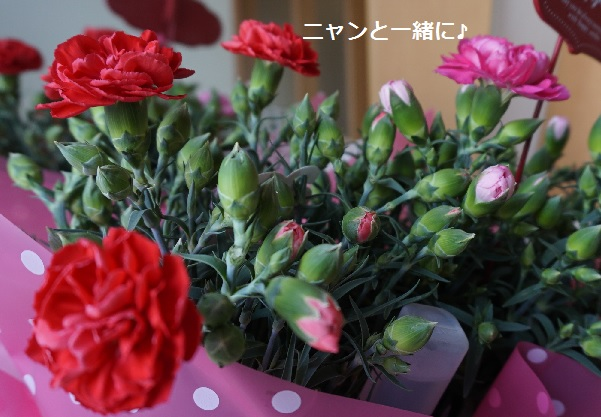 hahanohihiro.jpg