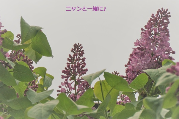 kyourira526.jpg