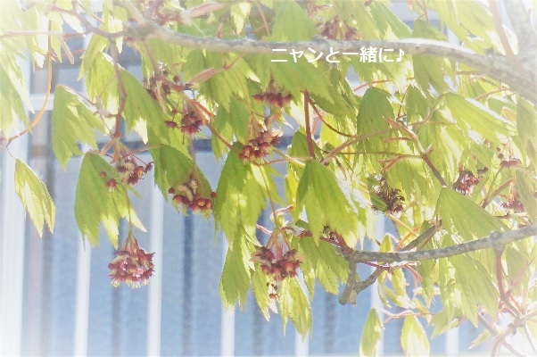 momiji517.jpg