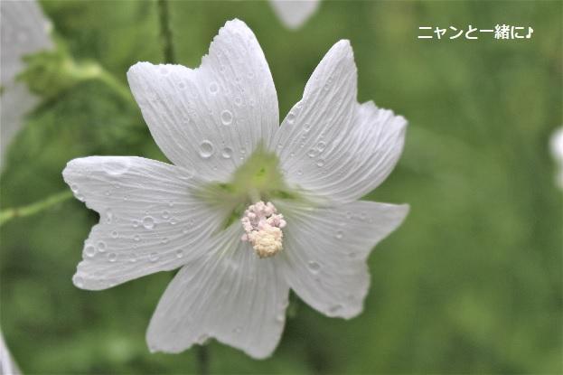 musukumarou704.jpg