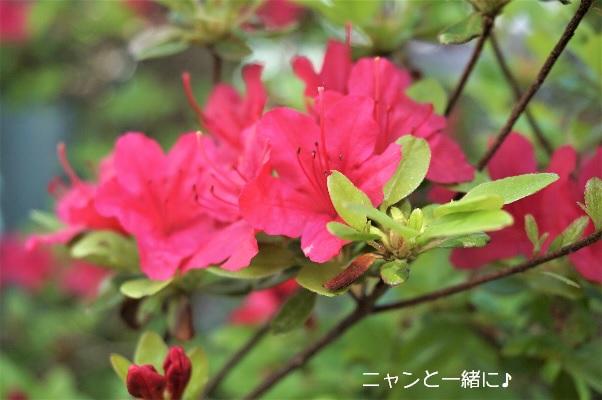 satuki603.jpg