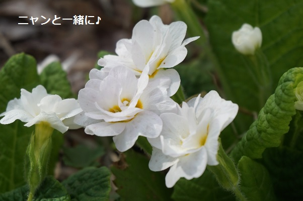 yaesiro510.jpg