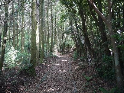 安満岳遊歩道(1)