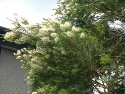 170623カフェ村上 (4)