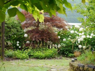 170629朝の庭