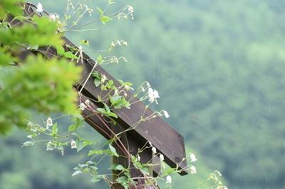 170709雨の朝 (1)