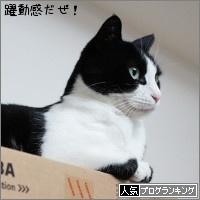 dai20170510_banner.jpg