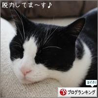 dai20170517_banner.jpg