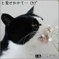 dai20170519_banner.jpg