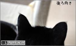 dai20170525_banner.jpg