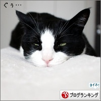 dai20170605_banner.jpg