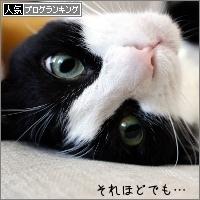dai20170613_banner.jpg