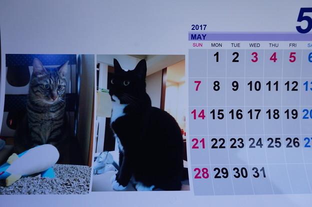 2017.5のカレンダー写真