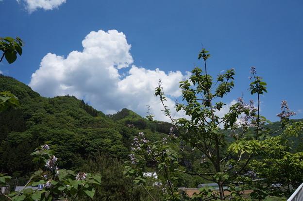 山の景色と桐の木