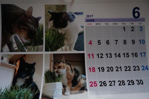 2017.6のカレンダー