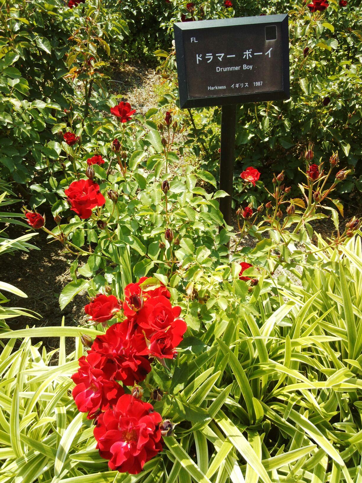紅子と骨子のハンギング・ガーデン