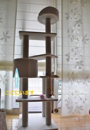タワー10