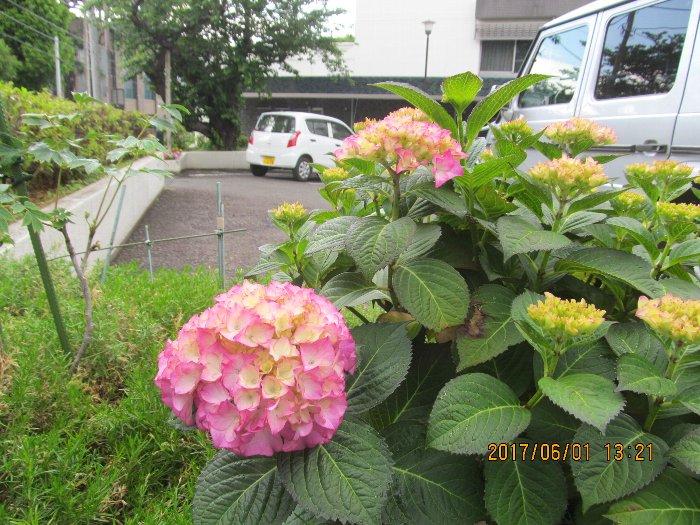 2017ykhflower36.jpg