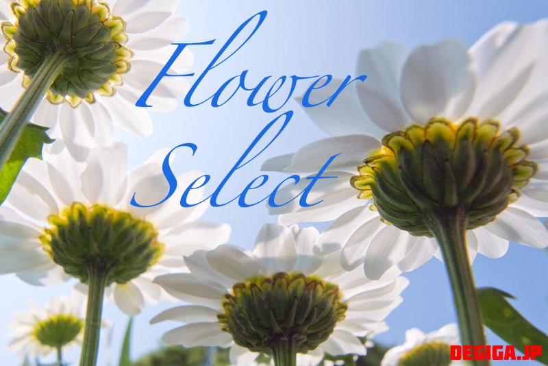 flower-select