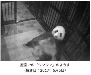 上野動物園シンシン