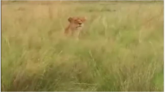 ライオン2017年6月27日