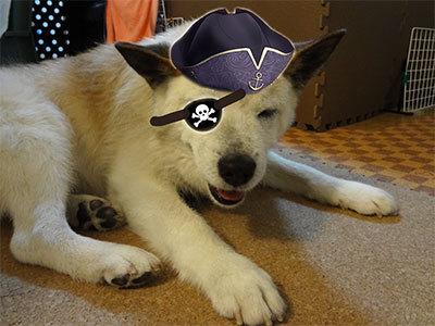 海賊でんでん