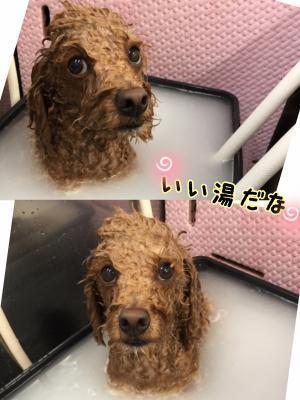 ちょ_convert_20170617214417