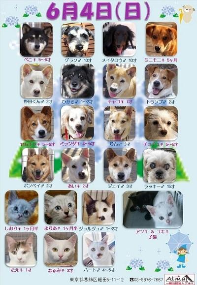 ALMA ティアハイム 6月4日 参加犬猫一覧