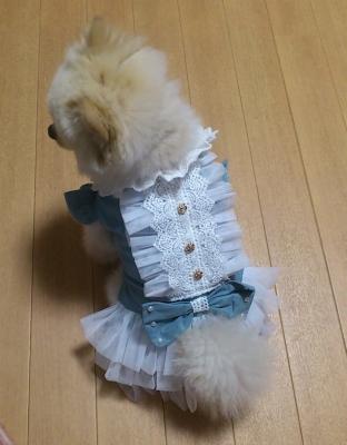 お姫様5号 犬 ポメラニアン