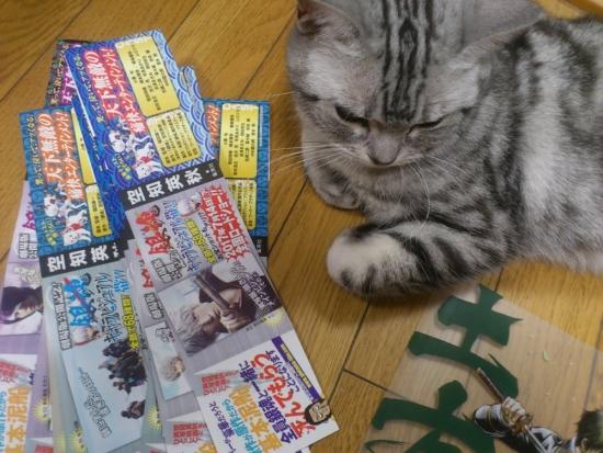 猫 ビジュアル帯