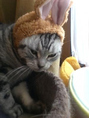 ねこうさぎちゃん 猫