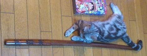 猫 お姫様4号 洞爺湖