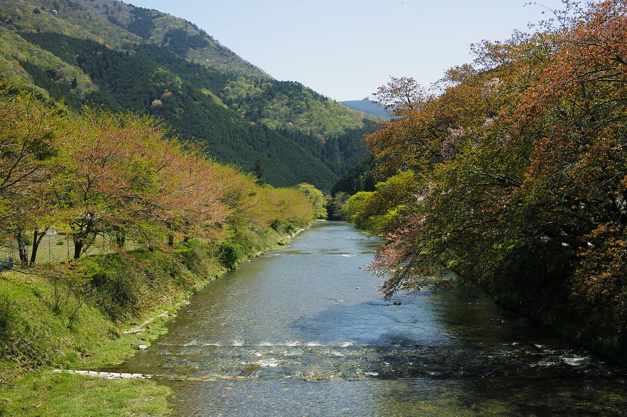 大原葉桜X01