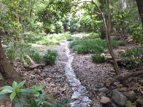 相模原段丘崖からの湧水の流れ