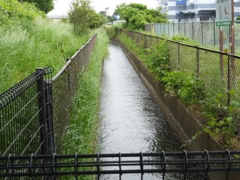 昭和用水・新八木間橋下流