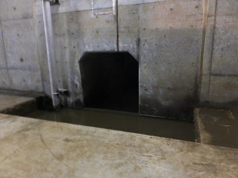 川和遊水地・排水口