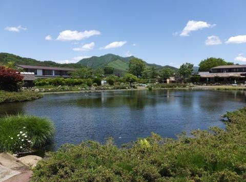 忍野八海・資料館内鯉の池
