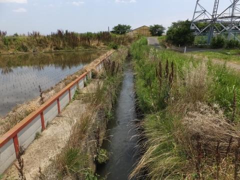 小稲葉排水路