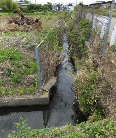 城島用水から分水
