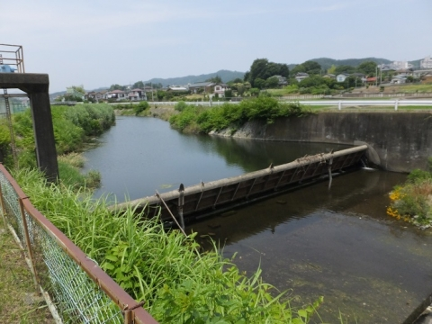 荻野川・権現堂橋上流の取水堰
