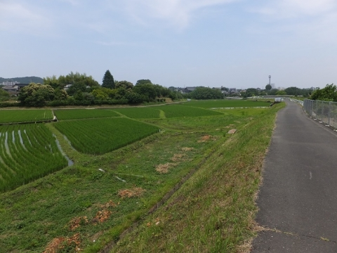 荻野川左岸の田んぼ・厚木市中荻野