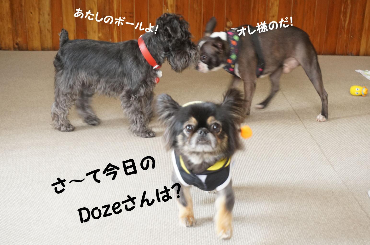 DSC07371.jpg