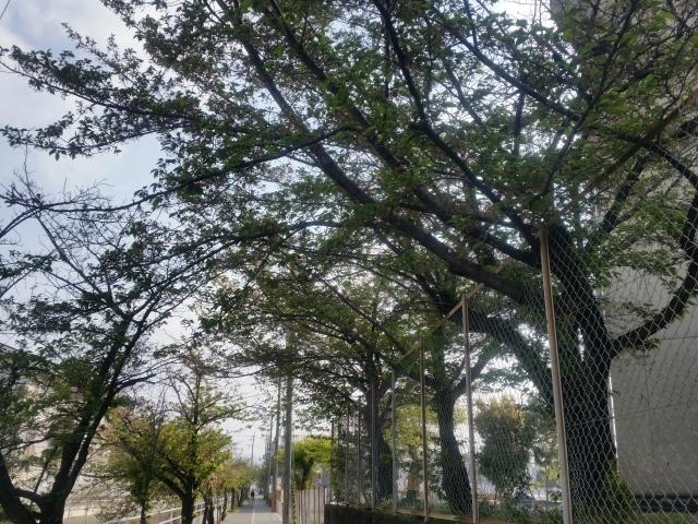 blog 2886